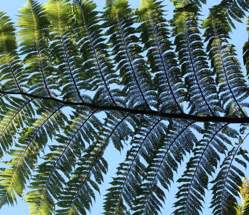 Up to the Fern